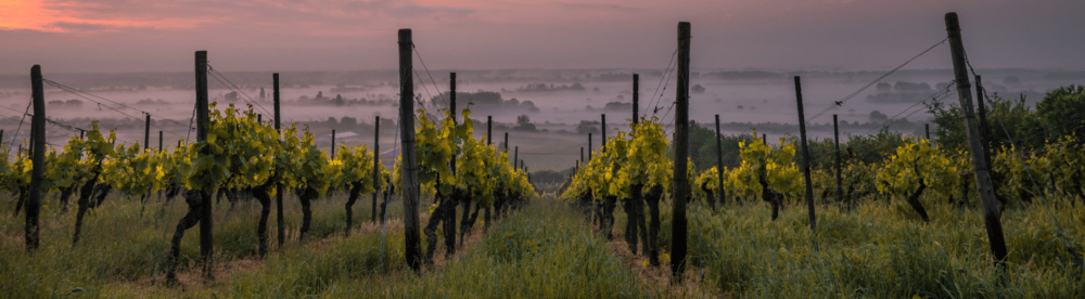 what makes traveling vineyard best choice