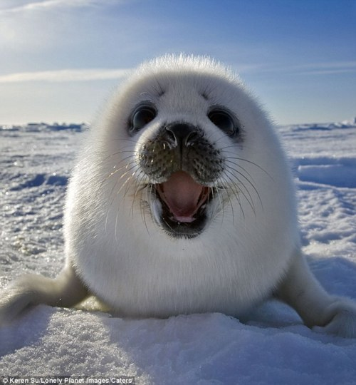 RIOT (banda) - Página 3 Happy-seal